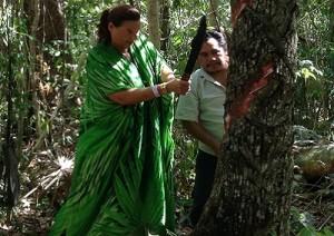 albero-della-gomma