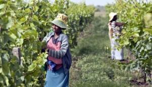 vino-etiopia-marcopolonwes