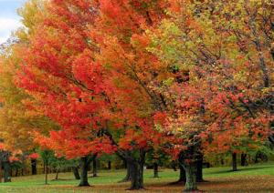 fall-foliage-marcopolonews