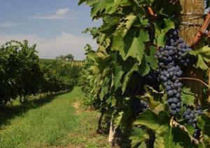 montepulciano-vino-marcopolonews
