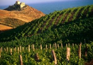 sicilia-vendemmia2014-marcopolonews