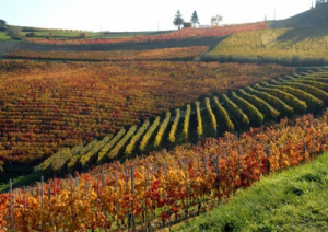 vino-expo-marcopolonews