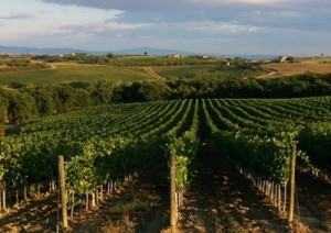 vino-nobile-montepulciano-marcopolonews