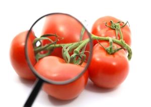 Sicurezza-alimentare-europea-marcopolonews