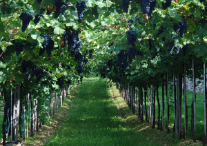 atlante2_dei_territori_del_vino_italiano-marcopolonews
