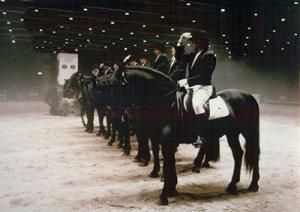 cavallo_murgese_clip_image005