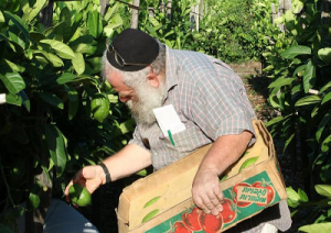 cedro-ebrei-rabbini-marcopolonews