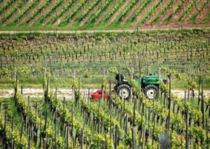 sostenibilita-vino-marcopolonews