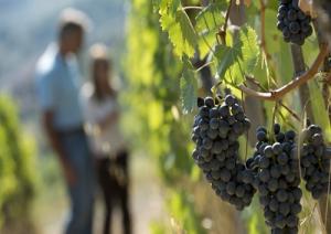 vino-sostenibile-marcopolonews