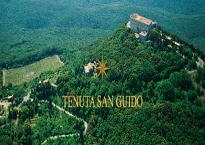 Tenuta-San-Guido-marcopolonews