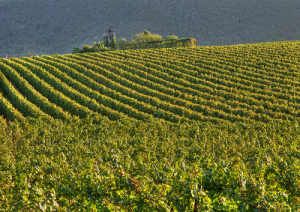 franciacorta-vigne-marcopolonews