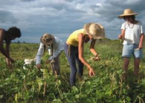 giovani-agricoltura-marcopolonews