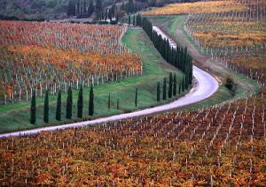 viticoltura-marcopolonews