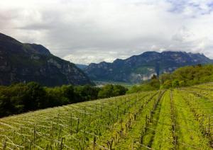 viticoltura1-marcopolonews