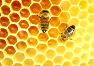 miele-api-marcopolonews