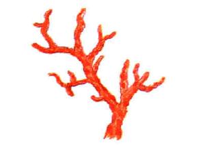 corallo-marcopolonews