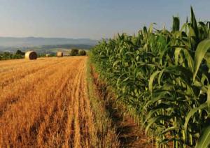 Agricoltura_marcopolonews copia