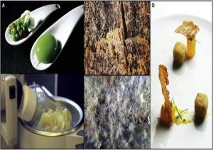 cucina1-molecolare-marcopolonews