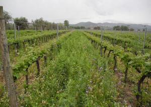 biodiversità-vino-marcopolonews