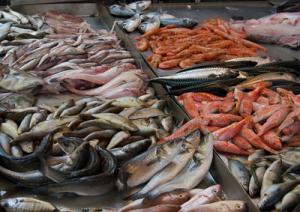 fish-marcopolonews