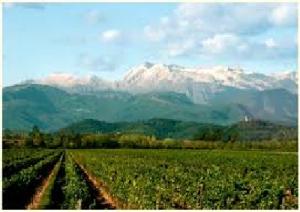 vigne-prealpi-marcopolonews