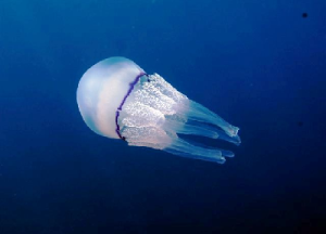 medusa-marcopolonews