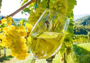 vino-biologico1-marcopolonews