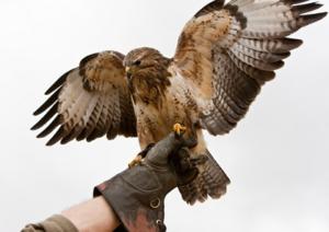 falconeria-marcopolonews